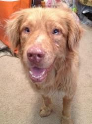 Adopt Ram On Petfinder Dog Adoption My Animal Australian Shepherd