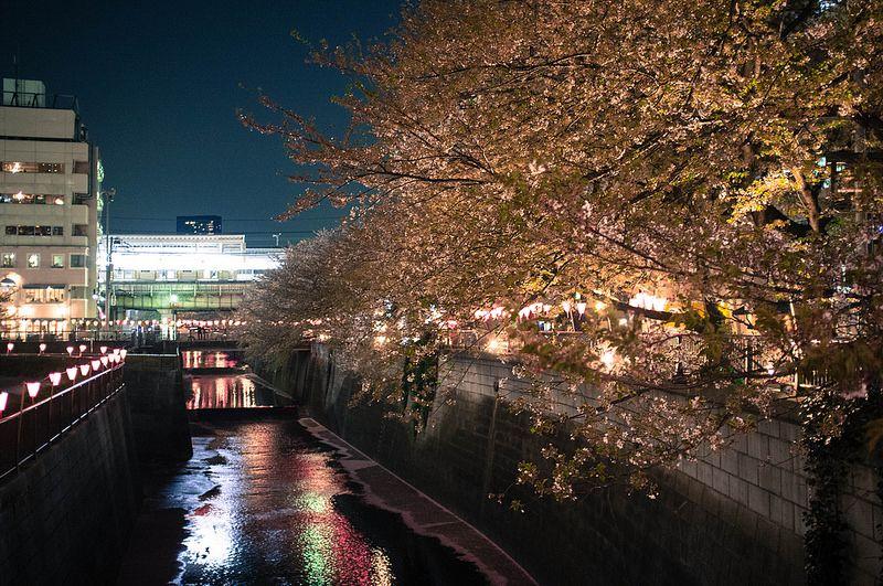 Meguro River by Leonard Lin