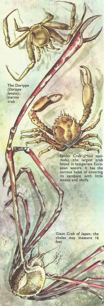 spider heart | fabbri. illustrated encyclopedias | Pinterest | Spider