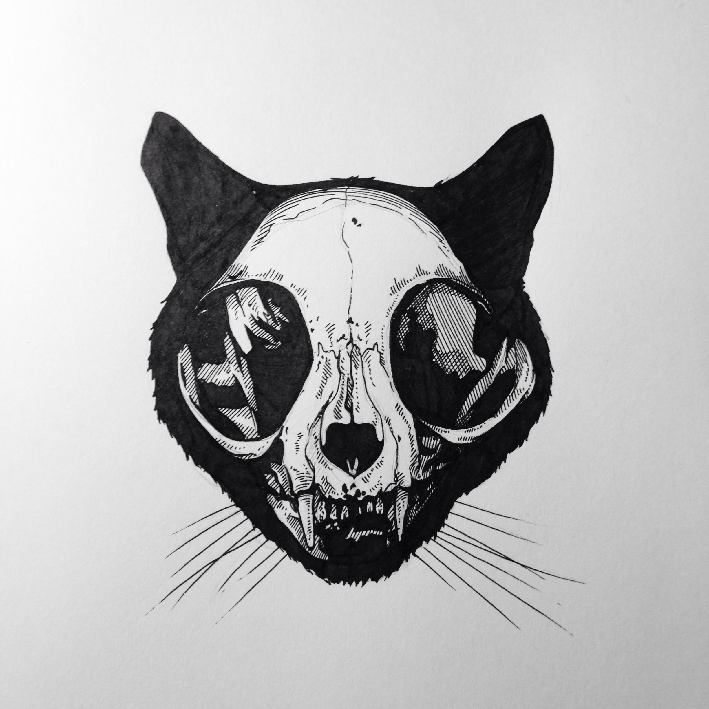 cat skull how to draw