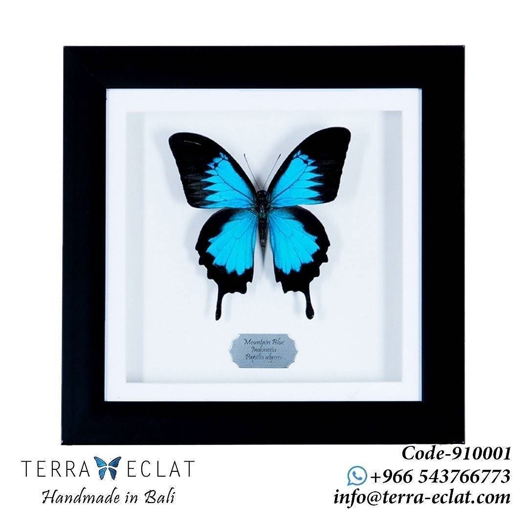 Gift A Real Butterfly Fram Or Give Ur Decor A Fresh Look With This Elegant Home Collection From Terraecl Butterfly Wings Unique Gemstones Real Butterfly Wings
