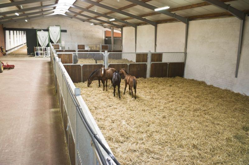 Victoria Max Theurer Gestut Vorwerk Amazing Horse Barns Horse Barns Dream Horse Barns