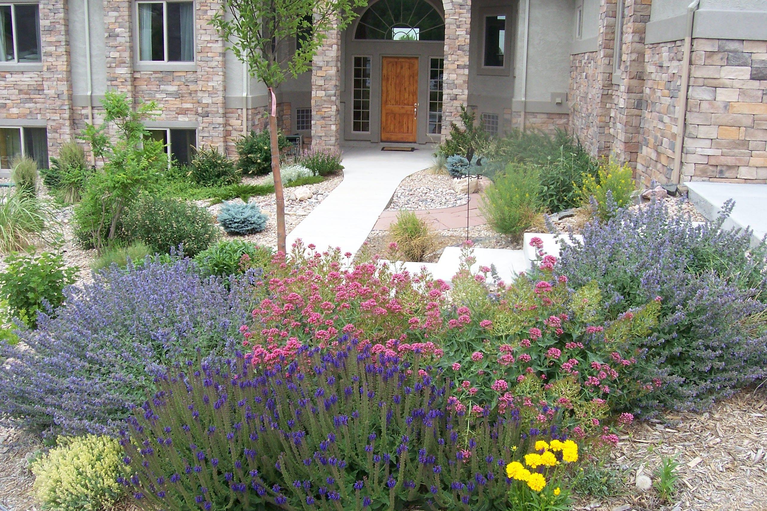 Bachelor Garden Front Yard Landscaping Xeriscape Colorado Landscaping