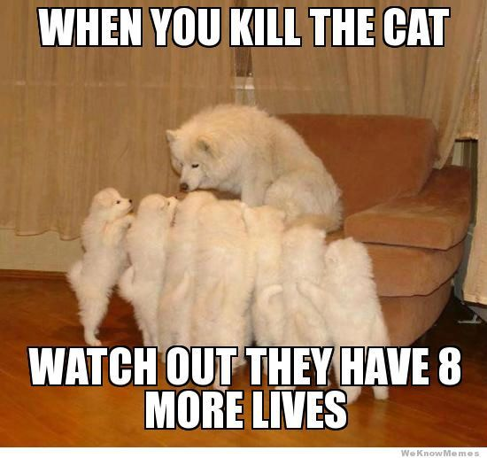 Cat+vs+Dog+Meme | make your own Storytelling Dog meme here ...