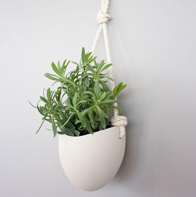 The Styled Plant Giveaway Paisagismo Jardinagem Porcelana