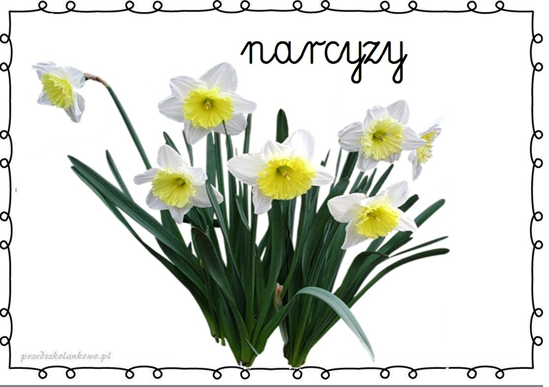 Pin By Joanna On N Tree Photoshop Plant Images Flower Names