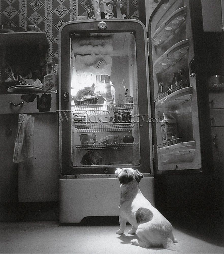 TV Dog by Howard Berman | Jack russell terriers, Terriër, Jack ...