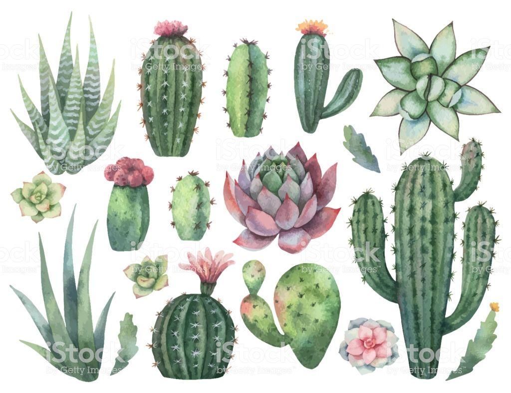 Image Result For Cactus Cacti Succulents Cactus Planting