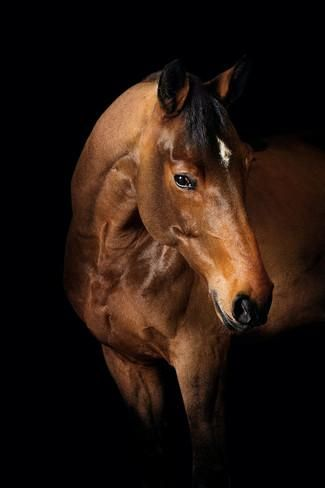 Horse Photographic Print by Fabio Petroni at AllPosters.com