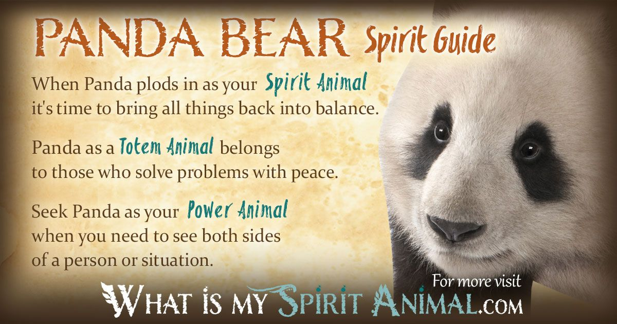 Panda Bear Symbolism Meaning Totems Power Animal And Bear Meaning