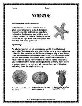 Echinoderms Worksheet Answers