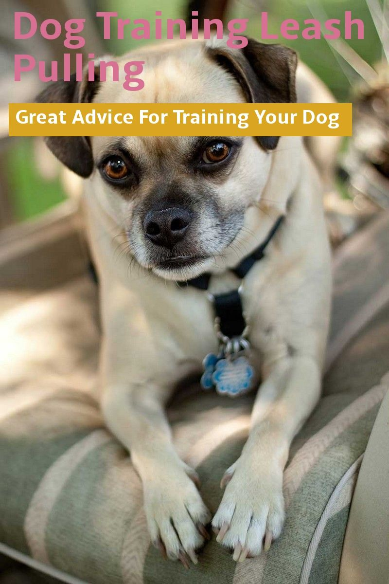 Great Advice For Dog Training Leash Pulling Want Additional Info Click On The Image Dogtrainingleashpul Dog Leash Training Dog Training Training Your Dog