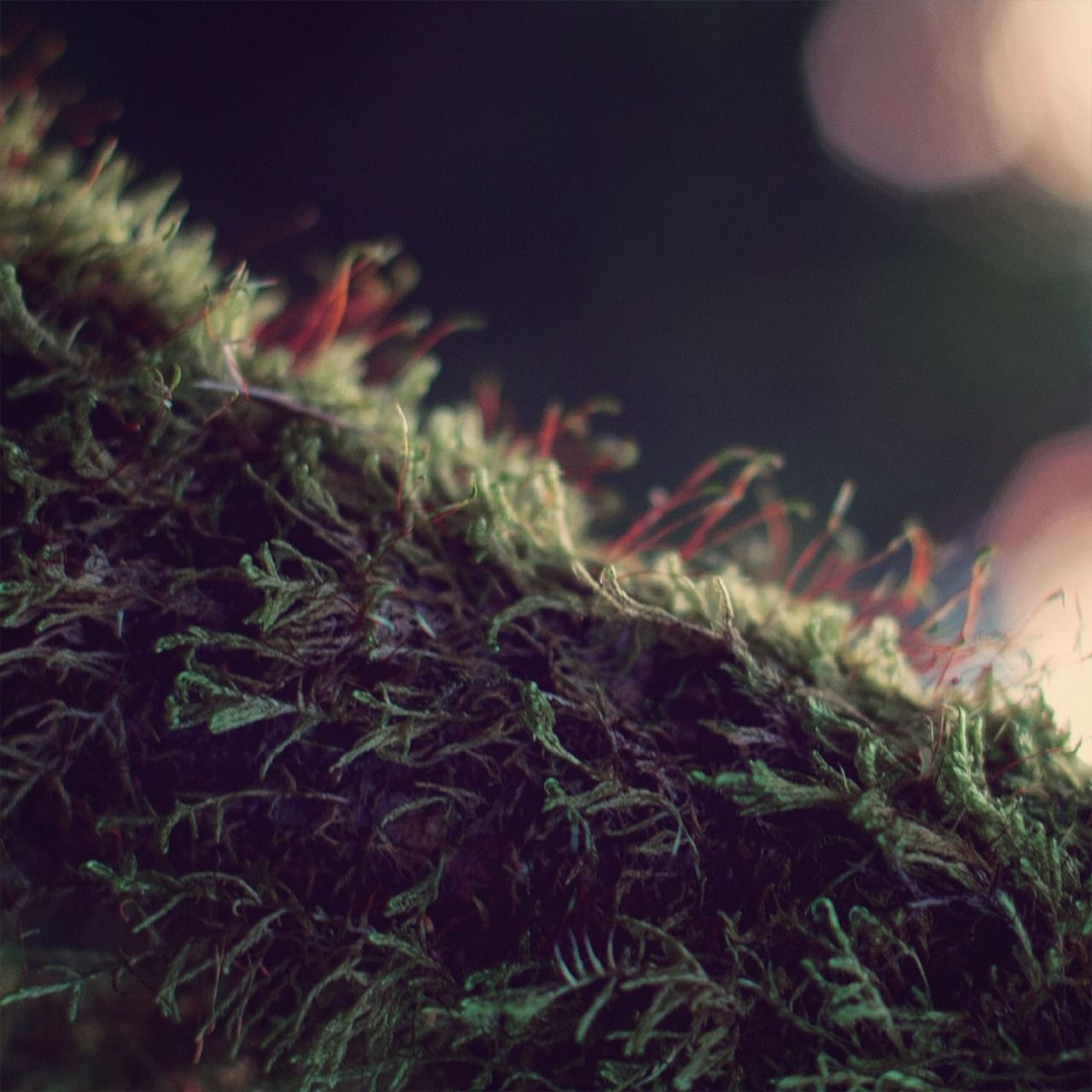MOSS   by •NOIRERORA• - #macro #moos #moss #natur #nature #noirerora #on #original #photographers #photography #tumblr