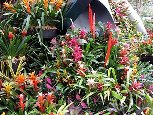 pin by carole faux on tropical landscaping plants i love