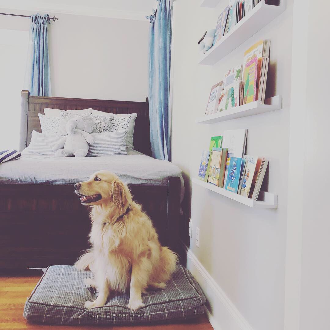 Floating book shelves from Wayfair. Custom dog bed from