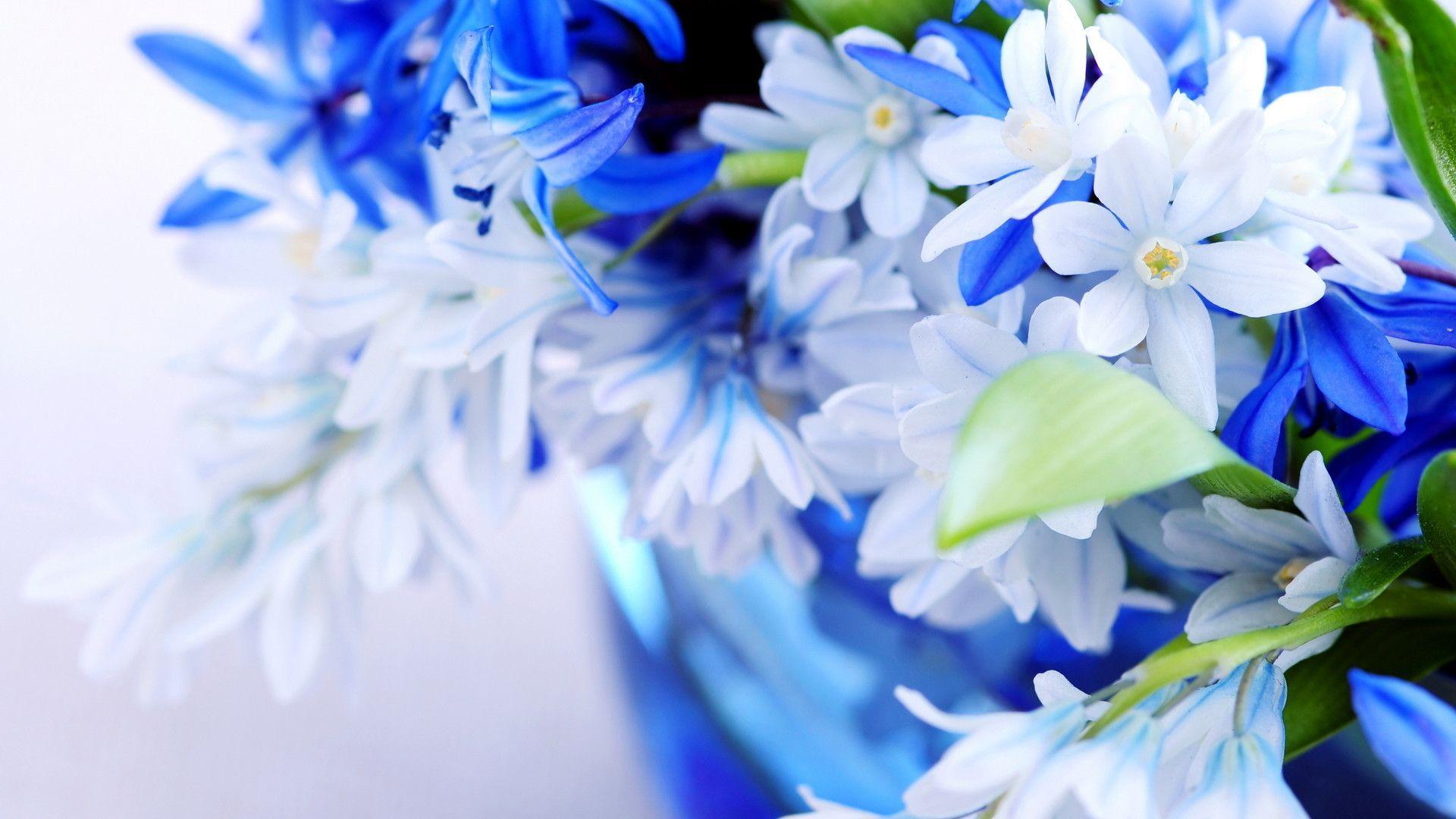 Desktop Wallpaper Hd 3d Full Screen Flowers Blue Flower Wallpaper Wallpaper Nature Flowers Flower Desktop Wallpaper
