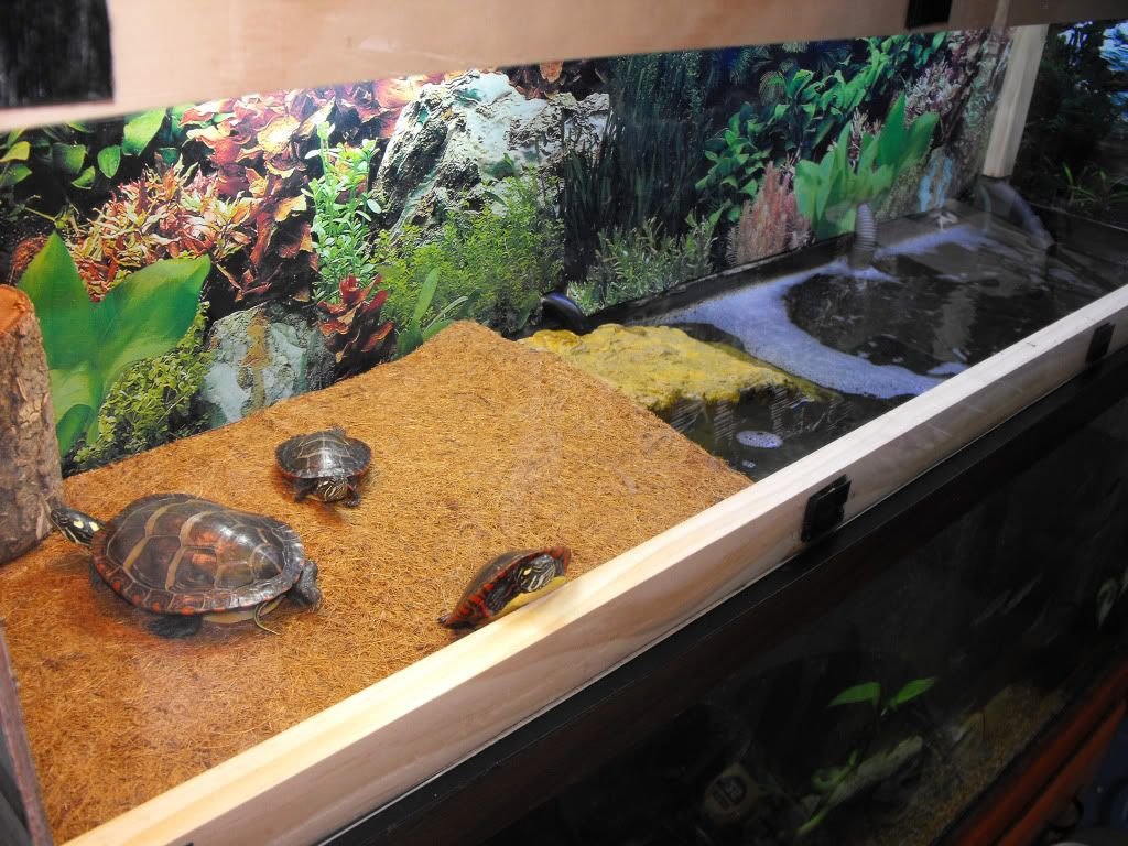 Painted turtle enclosures my 55 gallon eastern painted turtle set up with homemade turtle Diy indoor turtle pond