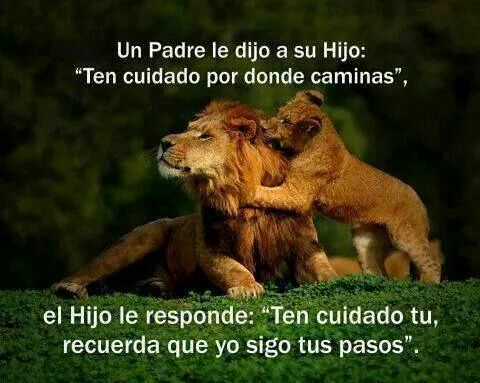 Padres E Hijos Frases Bear Brown Bear Y Animals