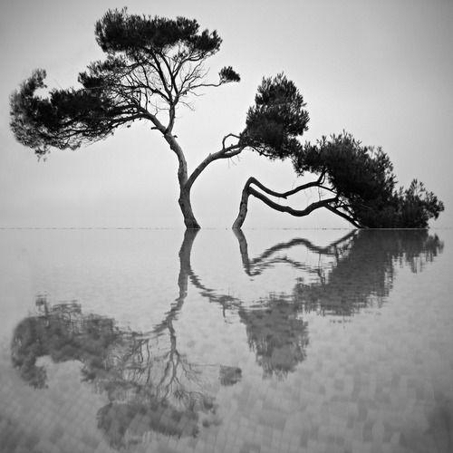 Found On Zeroingtumblr Via Tumblr Black And WhitePhoto White TreesNatural