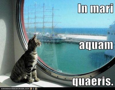 In mari aquam quaeris.  You're looking for water in the ocean.