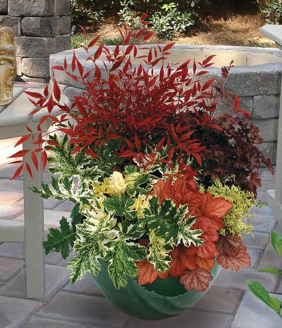 nandina domestica plus other containers with plant names plant palette pinterest. Black Bedroom Furniture Sets. Home Design Ideas