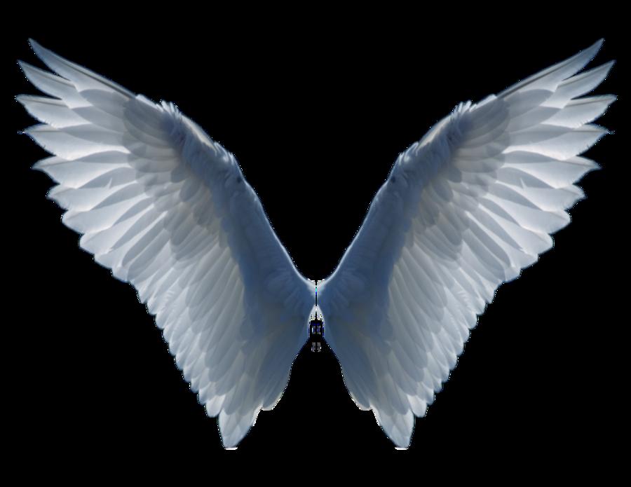 Wings Png28 Png 900 695 Wings Png Angel Wings Tattoo Angel Wings Art