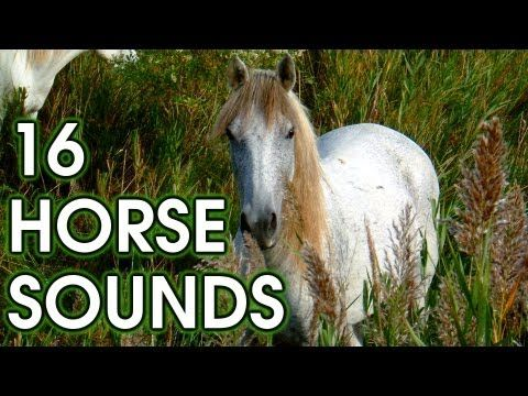 16 Horse Neigh Snort And Gallop Sound Effects High Quality Youtube Horses Sound Effects Sound