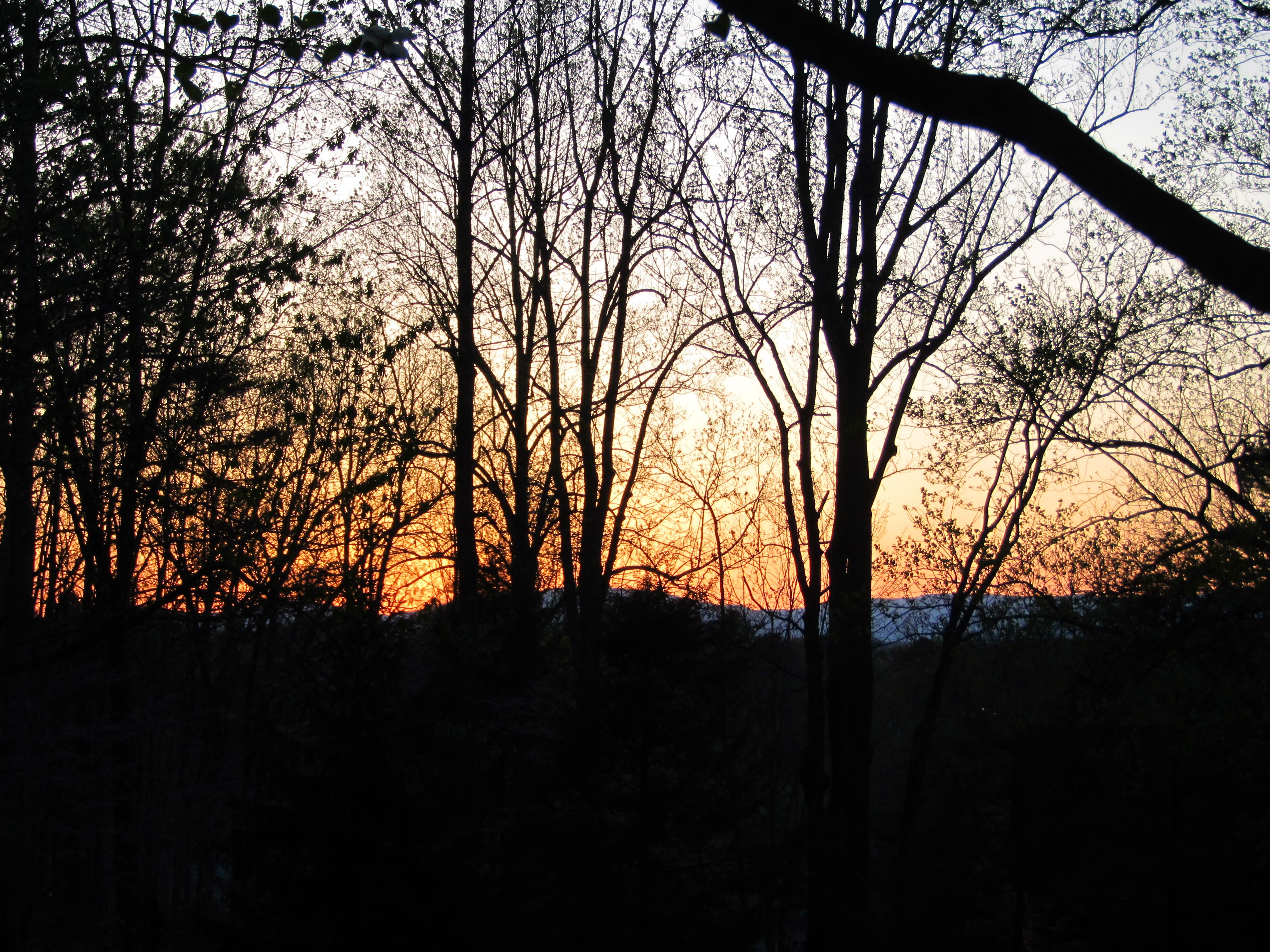 Sunset through the trees looking toward the Blue Ridge Mtns. Photo by Carol Greene