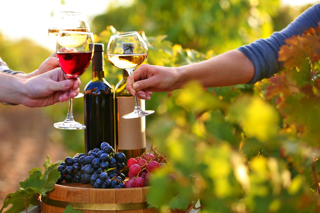 Why merlot grape is the excellent choice for wine
