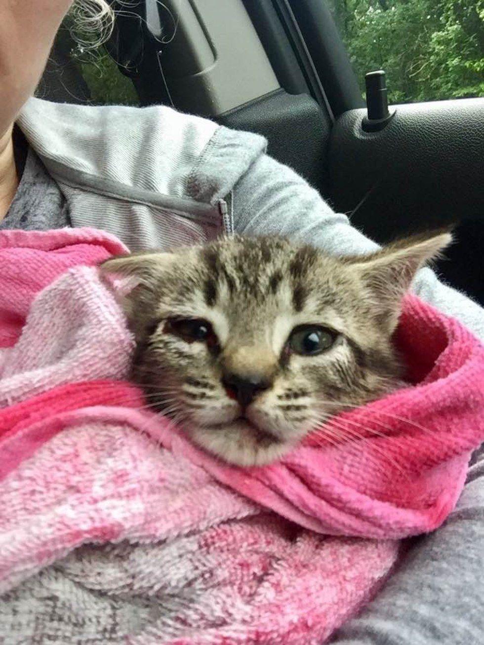 Woman Saves Kitten Lying On Highway Despite Getting A Ticket Kitten Little Kittens Tabby Kitten