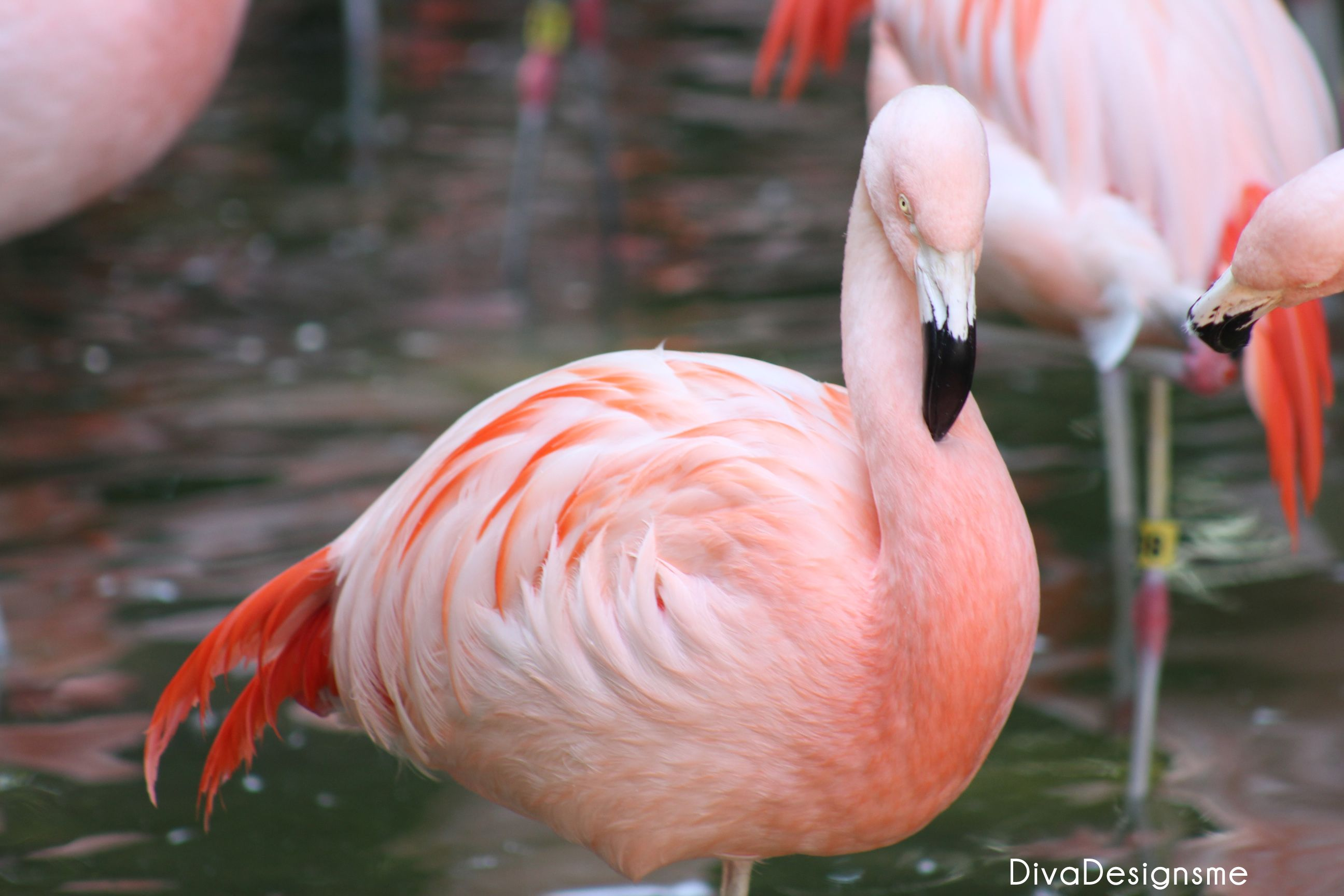 Flamingo at atlanta zoo atlanta zoo flamingo stone