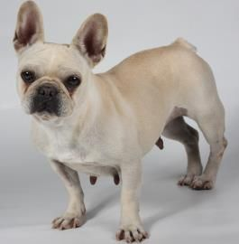 Dolly Is Available For Adoption At National Mill Dog Rescue