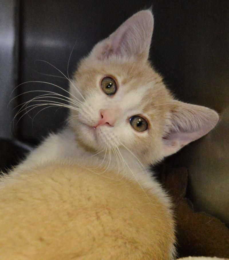 Adopt Riley on Humane society, Adoption, Animals