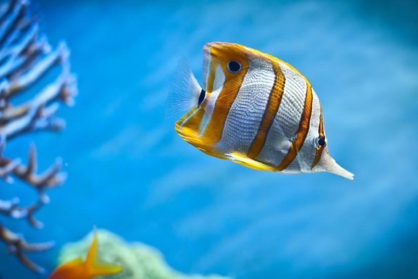 Ocean Fish Wallpaper Hd Wallpapers Backgrounds Images Art Photos Tropical Fish Aquarium Underwater Animals Fish Wallpaper
