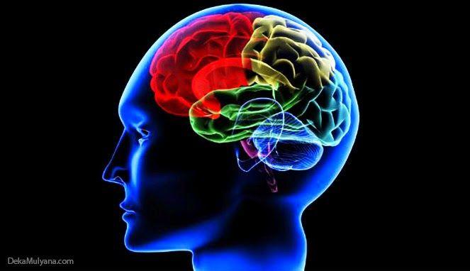 6 Hal Yang Bisa Membuat Otak Menjadi Bodoh: 6 Hal Yang Bisa Membuat Otak Menjadi BodohOtak ada...