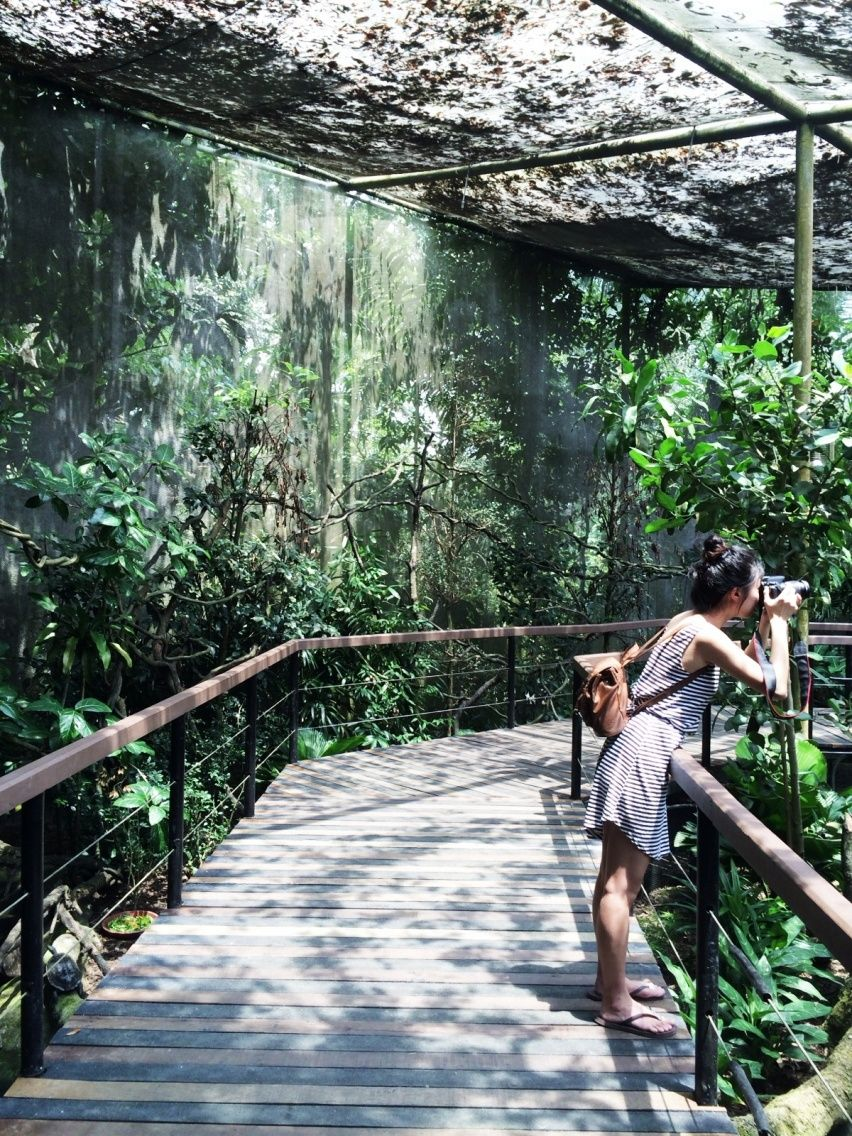 Singapore Zoo F R I D A Y C H I L D Vsco Grid With Images