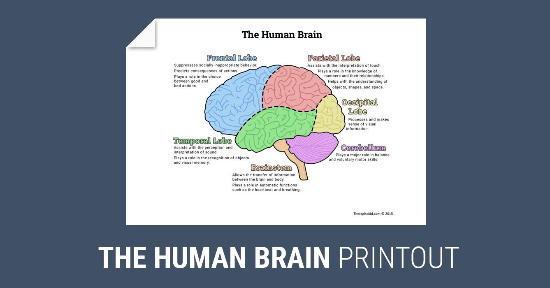 The Human Brain (Diagram) (Worksheet)   Therapist Aid ...