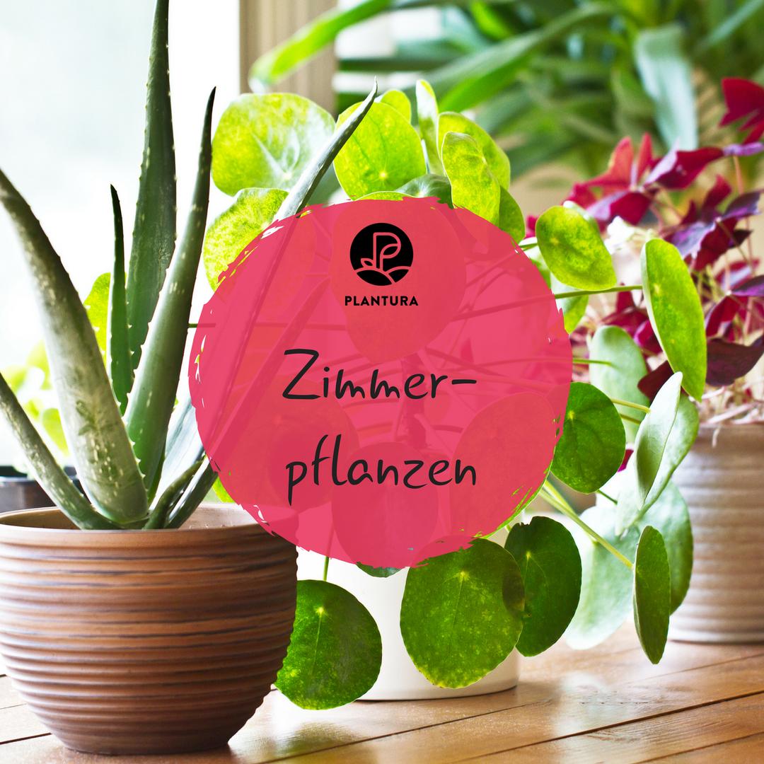 Pflanzen Wohnzimmer Ideen: Die 10 Kaum Zu Tötenden Pflanzen