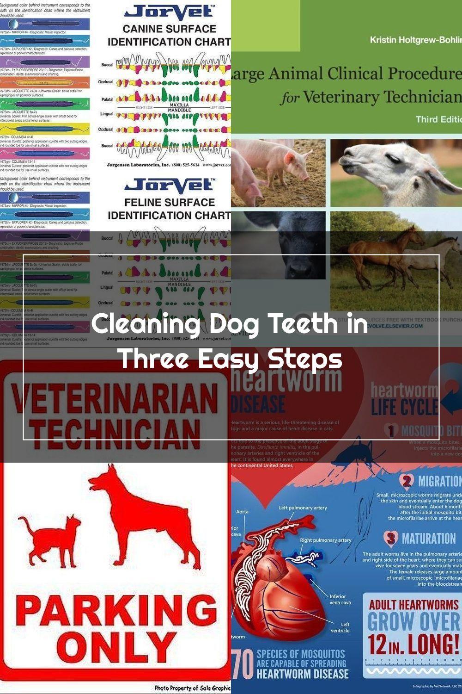 Veterinary Technician 上的釘圖