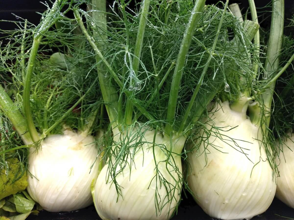 How To Grow Harvest And Use The Humble Fennel Plant 640 x 480