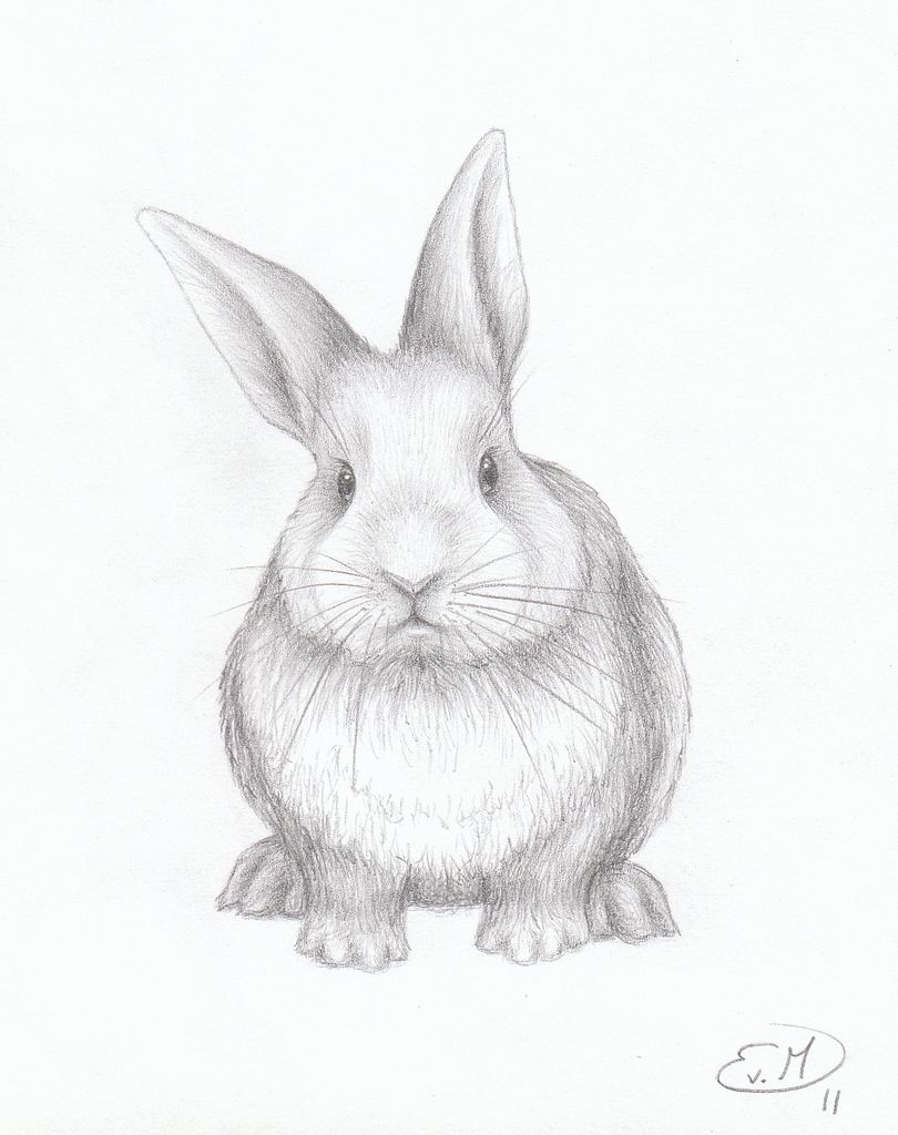cute bunny pictures to draw google search sketching rabbit