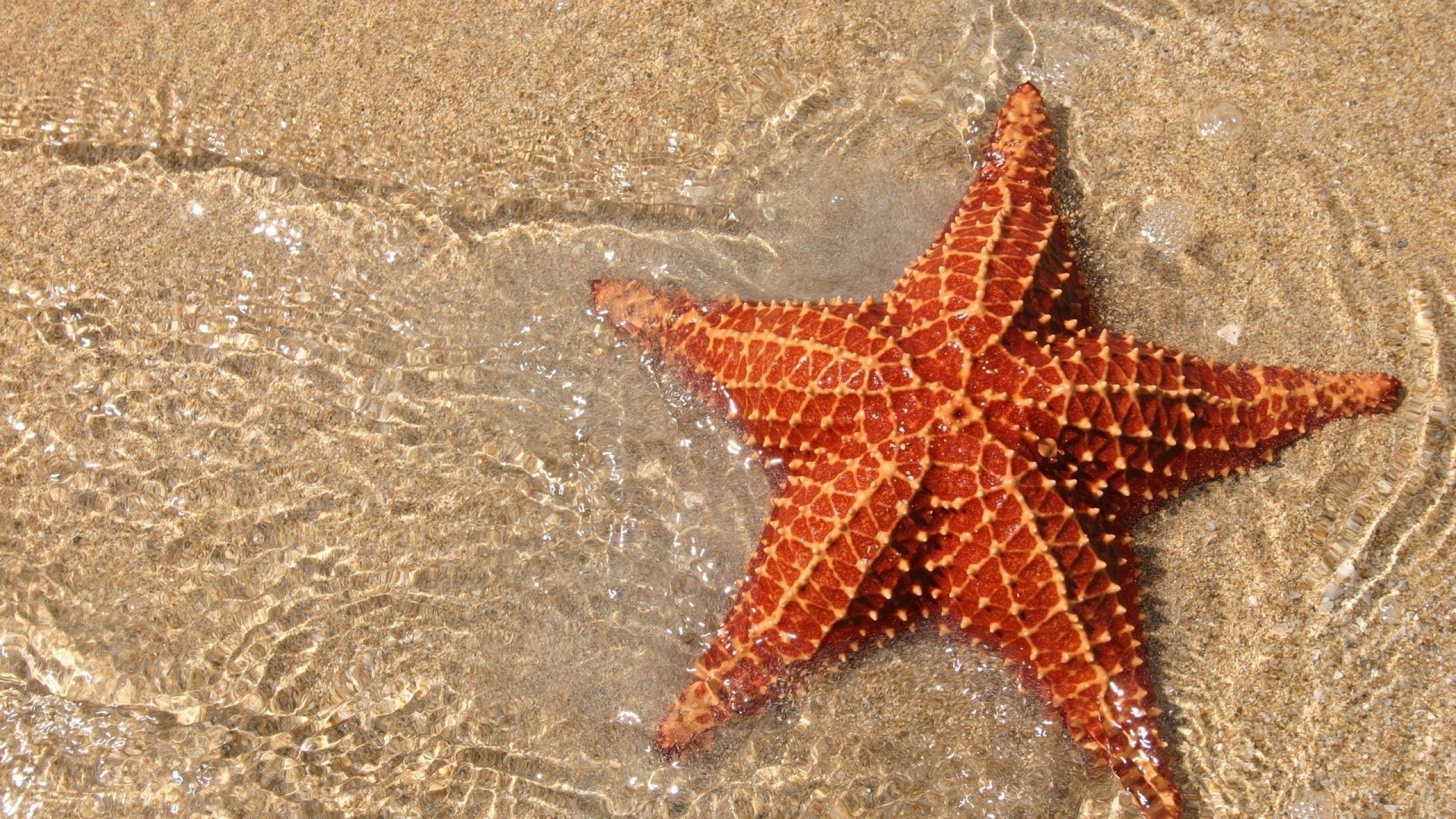 Find out: Seastar wallpaper on  http://hdpicorner.com/seastar/