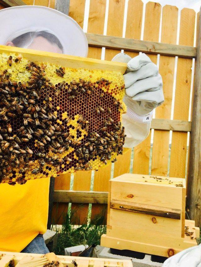 How to raise bees #beesupplies | Bee keeping, Backyard bee ...