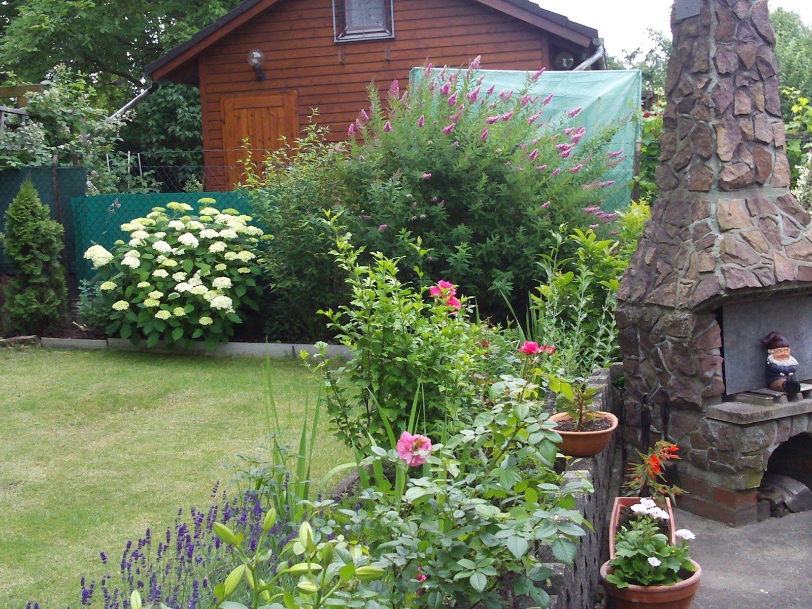 Buy blue dune lyme grass in nw arkansas - Spirea Triumphans Billardi Big Flowering Shrub In Back Row Mine Is In Year 4