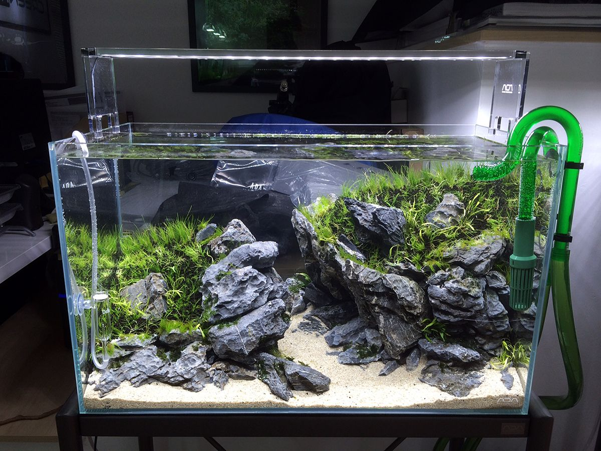 Another scape created on scapers day at greenaqua for Landscaping rocks for aquarium