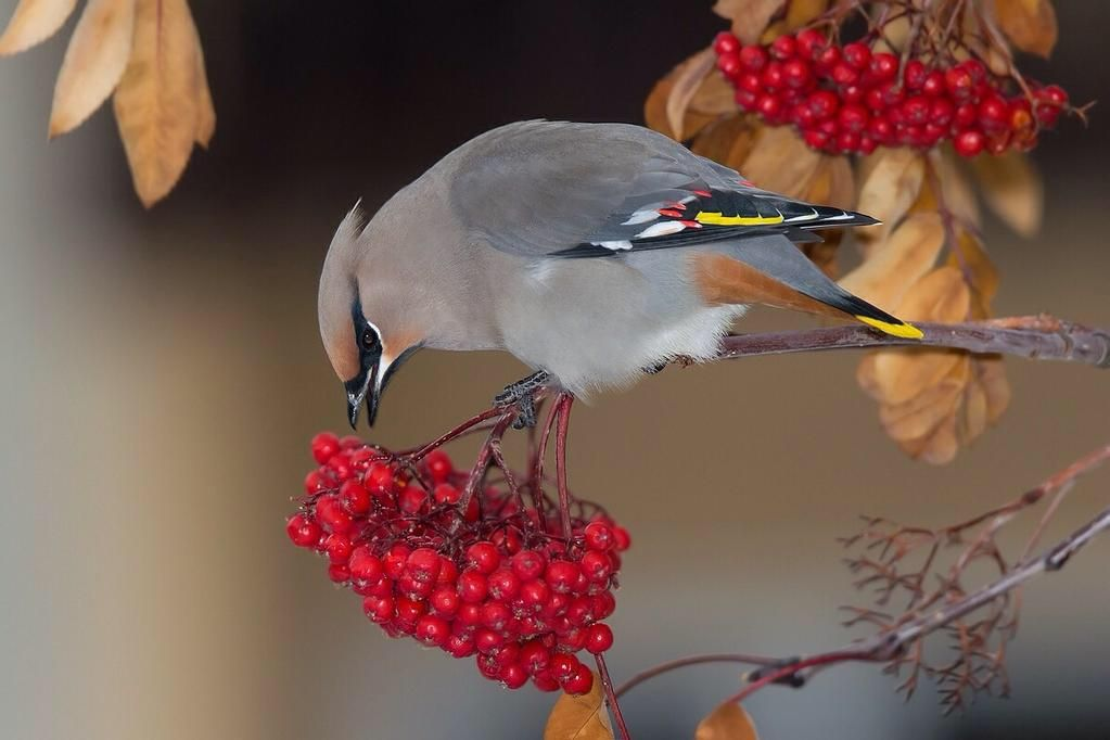 Danielle on Birds, Ontario birds, Beautiful birds