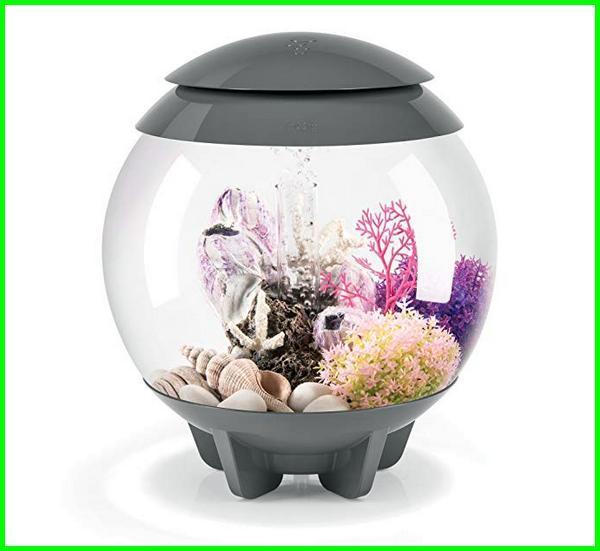 Nyari Aquarium Ikan Cupang Keren Ini Rekomendasi Terbaik Daftarhewan Com Di 2020 Aquarium Ikan Ikan Cupang Ikan