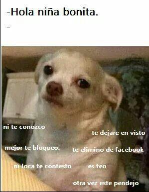 Oh Mi Corazon Juicio Dog Pitbull Aggressive Funny Sarcasm Perritos Aggressive Corazon Dog Funny Memes Divertidos Chistes Graciosos Memes