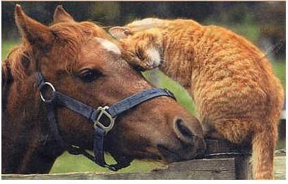 cat and horse. Friendship.