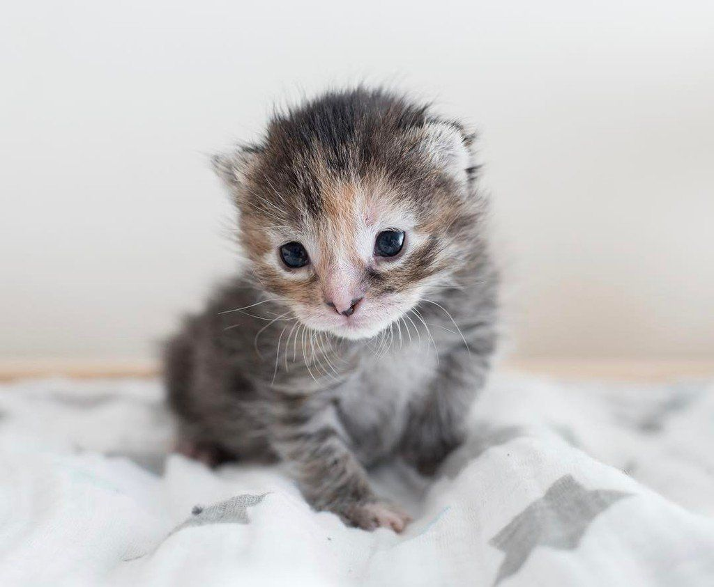 1 Twitter With Images Kitten Pictures Newborn Kittens Cute Cats And Kittens